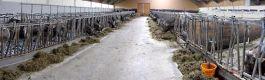Einblick in unseren Kuhstall